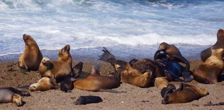 Seelöwen, Pinguine und Orcas…